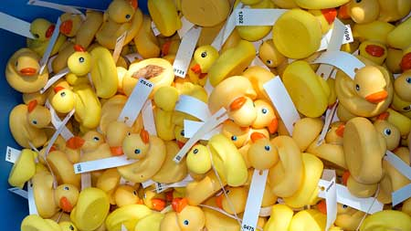 picture of 2014 Duck Derby race